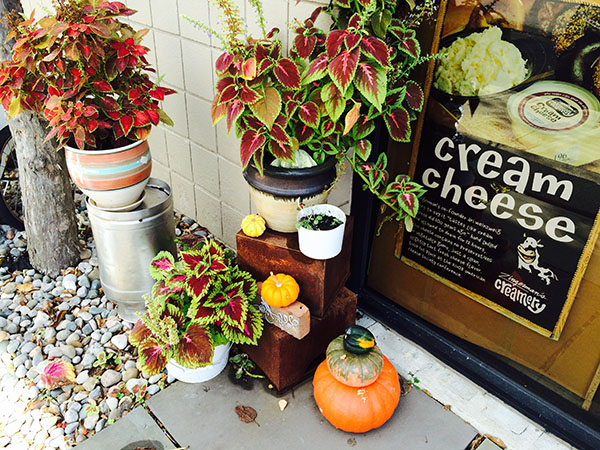 Autumn decor at Zingerman's Creamery