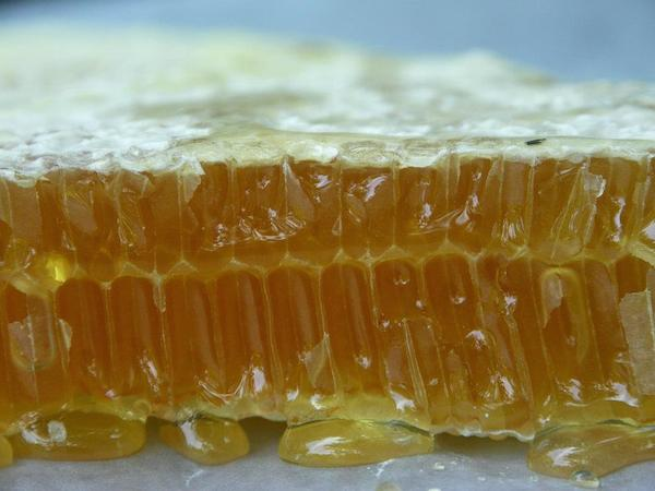 honey tasting with slow food huron valley