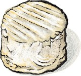 August Cheese of the Month: The Manchester