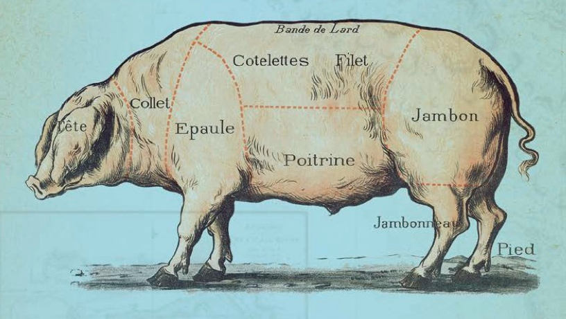 Snout-to-Tail History of the Humble Pig
