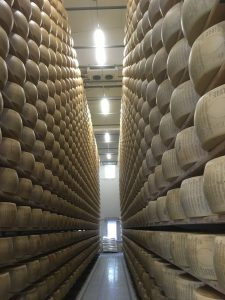 Parmigiano Reggiano aging on shelves from floor to ceiling