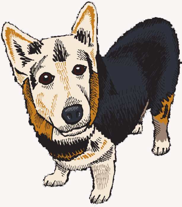 Illustration of a cute Corgi named Jelly Bean