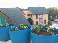 Zingerman's Deli: We're Growing a New Vision for Our Edible Landscape
